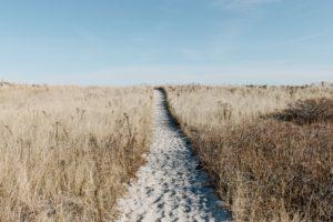 sandy beach pathway between dry grass